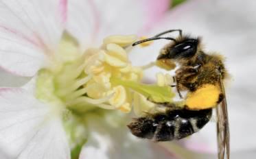 los insectos y el polen